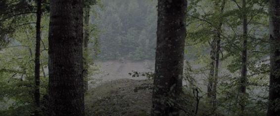 Urma Forest